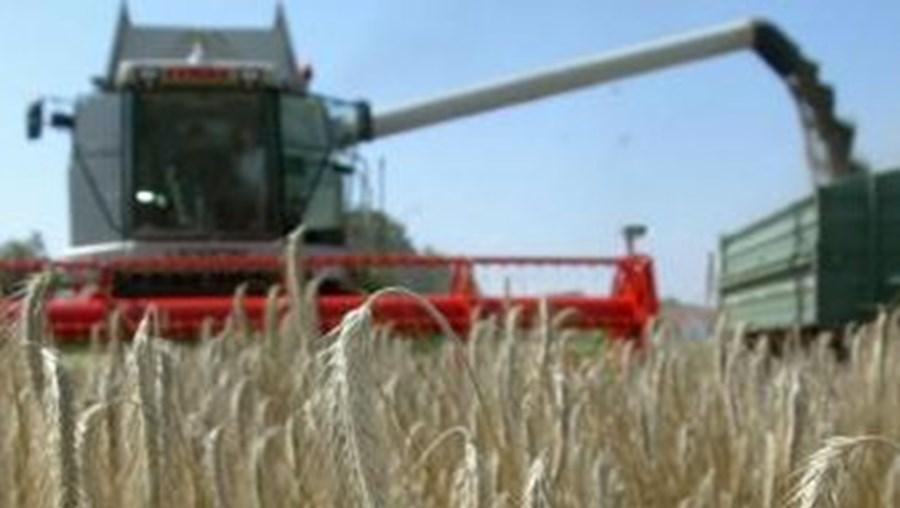 """A produção de cereais no ano agrícola de 2012, """"fortemente marcado pela seca"""", será a mais baixa desde 2005"""