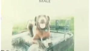 Família promete vender casa a quem encontrar cão