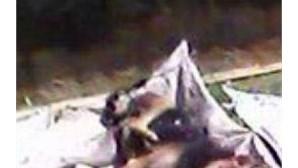 Câmara de Óbidos acusada do abate de cães