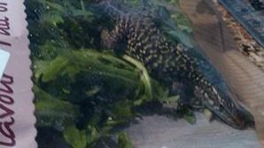 Electricista acha lagarto de 15 centímetros em salada