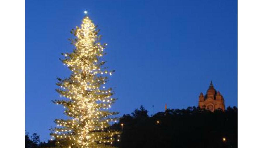 Viana do Castelo orgulha-se de exibir a maior árvore natural  de Natal da Europa