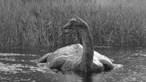 Fóssil do 'monstro de Loch Ness' encontrado na Antárctida