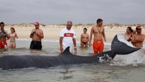 Banhistas salvam baleia na Fuseta