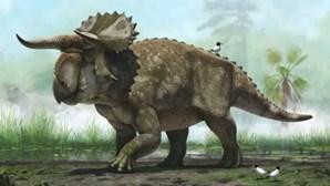 Nova espécie de dinossauros encontrada
