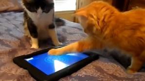 Gatos divertem-se com jogo de tablet