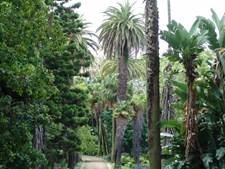 9. Jardim Botânico da Universidade de Lisboa: Paga-se dois euros de entrada (jovens, estudantes e idosos apenas pagam um euro) e a maioria dos visitantes são turistas
