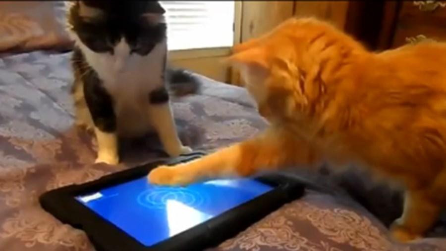 O jogo implica agarrar um peixe, algo que desperta a atenção dos animais