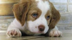 As 35 raças de cães mais inteligentes