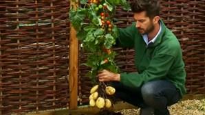 Há uma planta que dá tomates e batatas