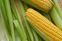O milho contém luteína e zeaxantina. Uma investigação do 'Journal of Agricultural and Food Chemestry' descobriu que o milho, ao ser cozinhado, aumenta a quantidade dos níveis de antioxidantes por porção