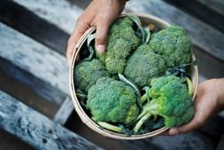 Os brócolos são ricos em vitamina C, bem como em luteína e zeaxantina