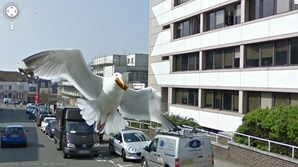 Gaivota sobrevoa câmara do veículo Google na cidade inglesa de Brighton