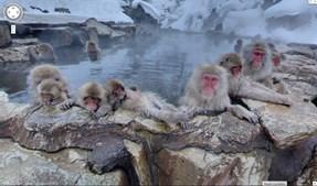 Macacos da neve banham-se no Parque de Macacos Jigokudani, na cidade japonesa de Yamanouchi