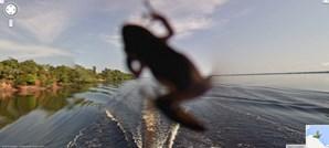Sapo no Rio Negro, Amazónia brasileira