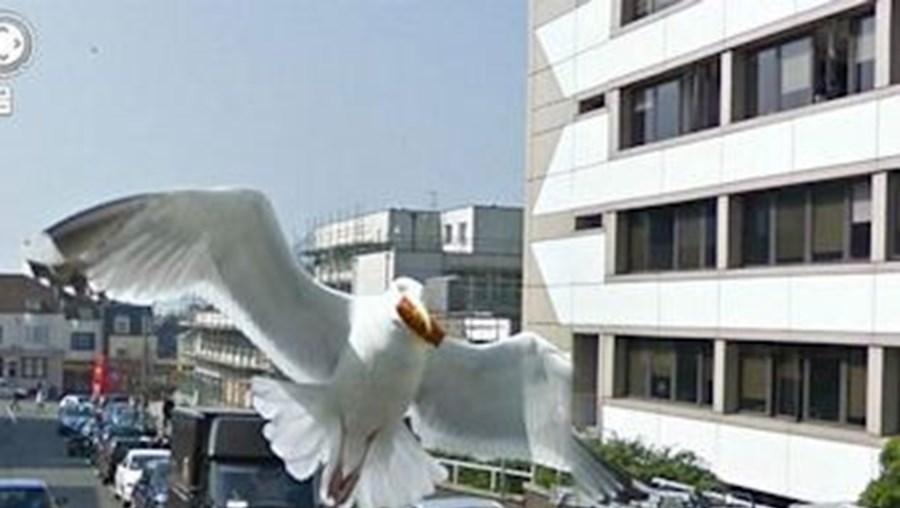 Uma gaivota em Inglaterra surpreendeu a câmara da Google