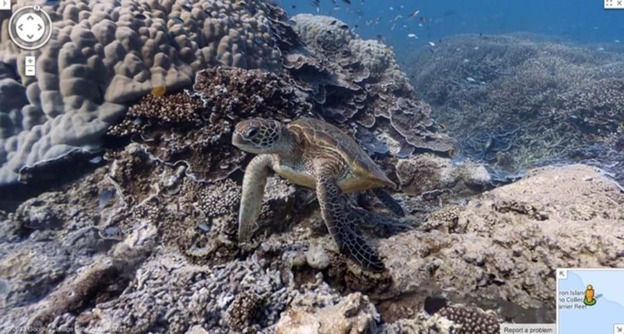 Tartaruga ao largo da ilha Heron, Grande Barreira de Coral
