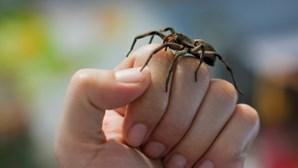 Mulher revela como evitar o aparecimento de aranhas com menos de dois euros