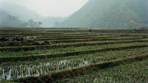 Alexandre Almeida revela um 'novo' Vietname