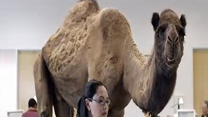 Hump Day - Happier than a Camel on Wednesday - GEICO