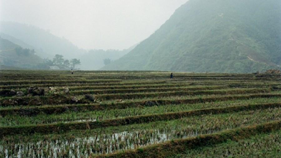 Pormenor de uma fotografia do Vietname tirada por Alexandre Almeida. É uma das fotos que estará patente no Brac até 12 de janeiro de 2014