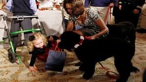 Cão português de Obama deita criança ao chão