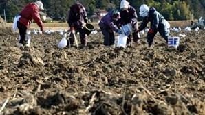 Desastre de 2011 em Fukushima causou 1.605 mortes indirectas