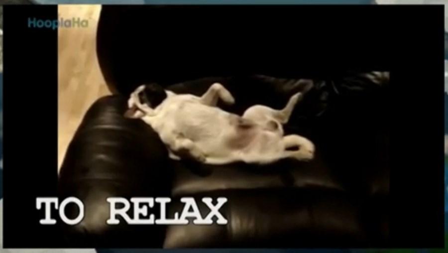 Mundo Louco, cão, amar, vídeos