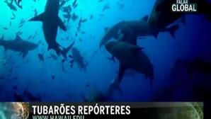 Tubarões à Steven Spielberg