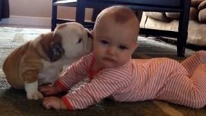 Bulldog ataca bebé com beijos