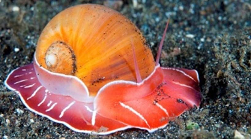 Resultado de imagem para caracois marinhos