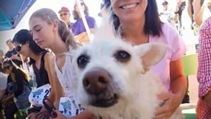 'Peanut' é o novo cão mais feio do mundo