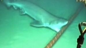 Tubarões atacam cabos de Internet