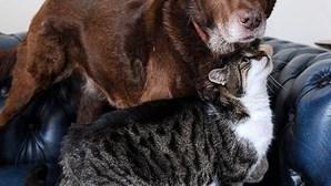 Gato é guia de cão cego