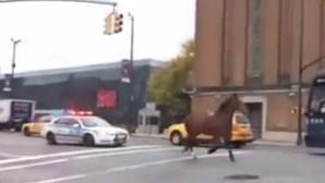 Cavalo em fuga causa alerta policial