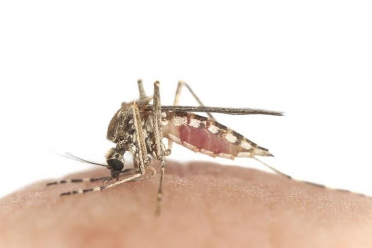 Bactéria isolada pode reduzir níveis de infeção