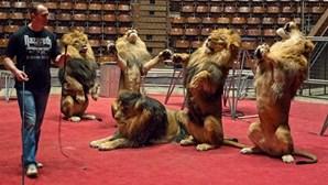 Funchal proíbe animais em circo