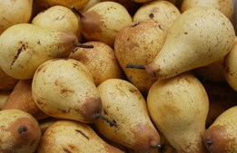 A Bragança chegou, na quinta-feira, um carregamento de 22 toneladas de maçã e pera rocha
