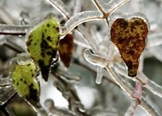 O gelo cobre a vegetação na cidade de Amstall, no norte da Áustria