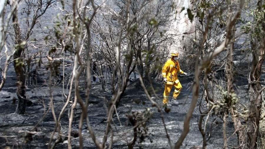 Uma indemnização de 332,8 milhões de euros vai ser paga pelos danos dos incêndios de 2009