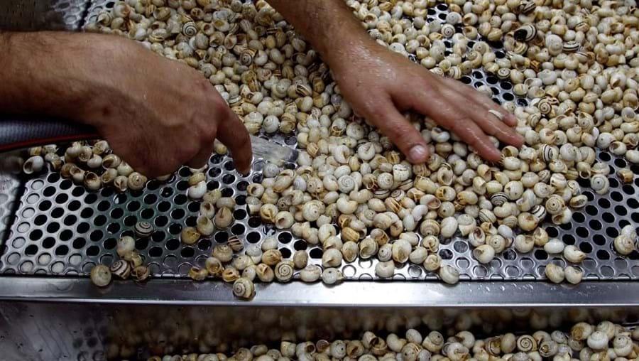 Em Portugal, são consumidas por ano cerca de 13 mil toneladas de caracóis