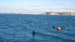 Investigadores sugerem alimentação mais sustentável para aquacultura