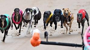 Parlamento rejeita proposta de proibição das corridas de galgos