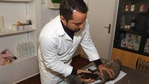 Oeiras oferece consultas no veterinário