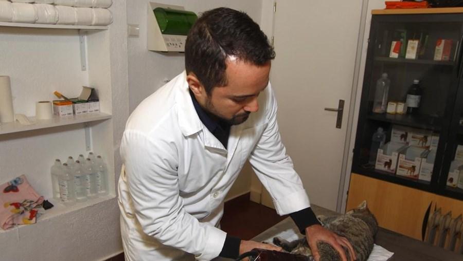 Veterinário Marcelo Rocha a esterilizar um gato