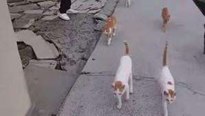 Gatos 'governam' ilha no Japão