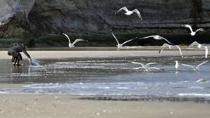 Corpo de vítima de tsunami no Japão é encontrado quase 10 anos após a tragédia