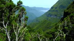Aviso amarelo nas regiões montanhosas da Madeira