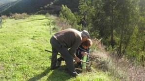 Câmara de Valongo destaca número de árvores plantadas