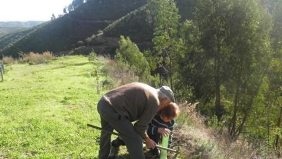 A área reflorestada abrange cerca de 12 hectares