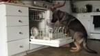 Baron, o cão que ajuda a lavar a loiça